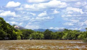 Half-day river cruise in Palo Verde jungle